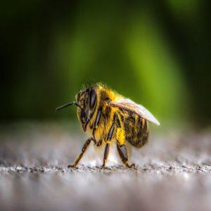 Significado de soñor con abejas